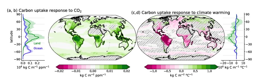 Carbon cycle response to elevated CO2 and enhanced warming